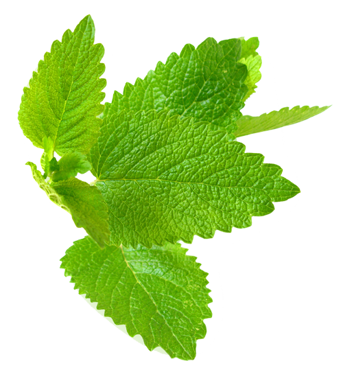 Lemon Balm - Uses in Natural Herbal Beauty & Skincare