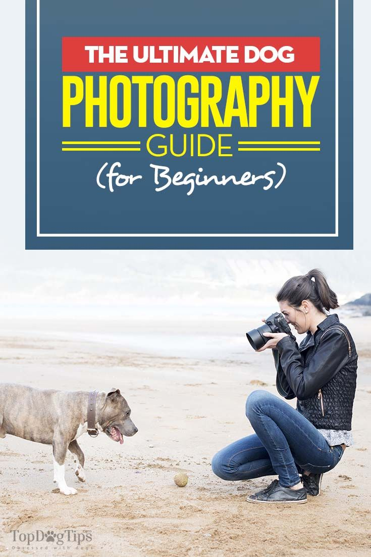Dog Photography: The Guide for Beginners