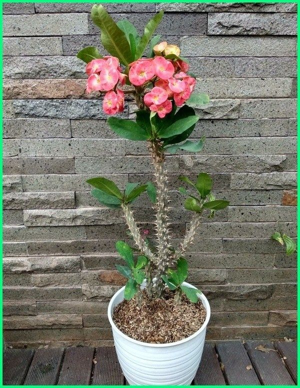 Tanaman Bunga Hias Yang Cantik Di Dalam Pot Silahkan Menanan Tanaman Menanam Bunga