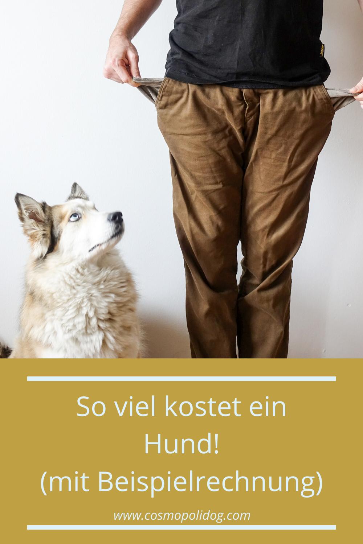 So Viel Kostet Ein Hund Im Monat Und Jahr In 2020 Hunde Hundchen Training Tierheim Hunde