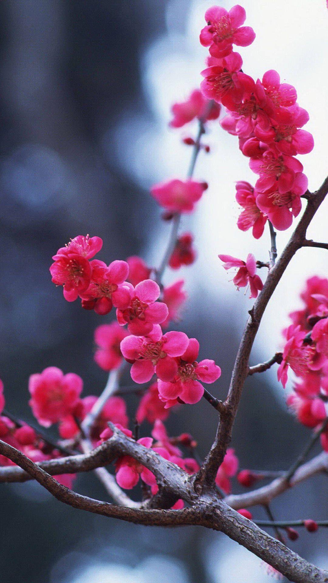Cherry Blossom iPhone HD Wallpaper Best flower wallpaper