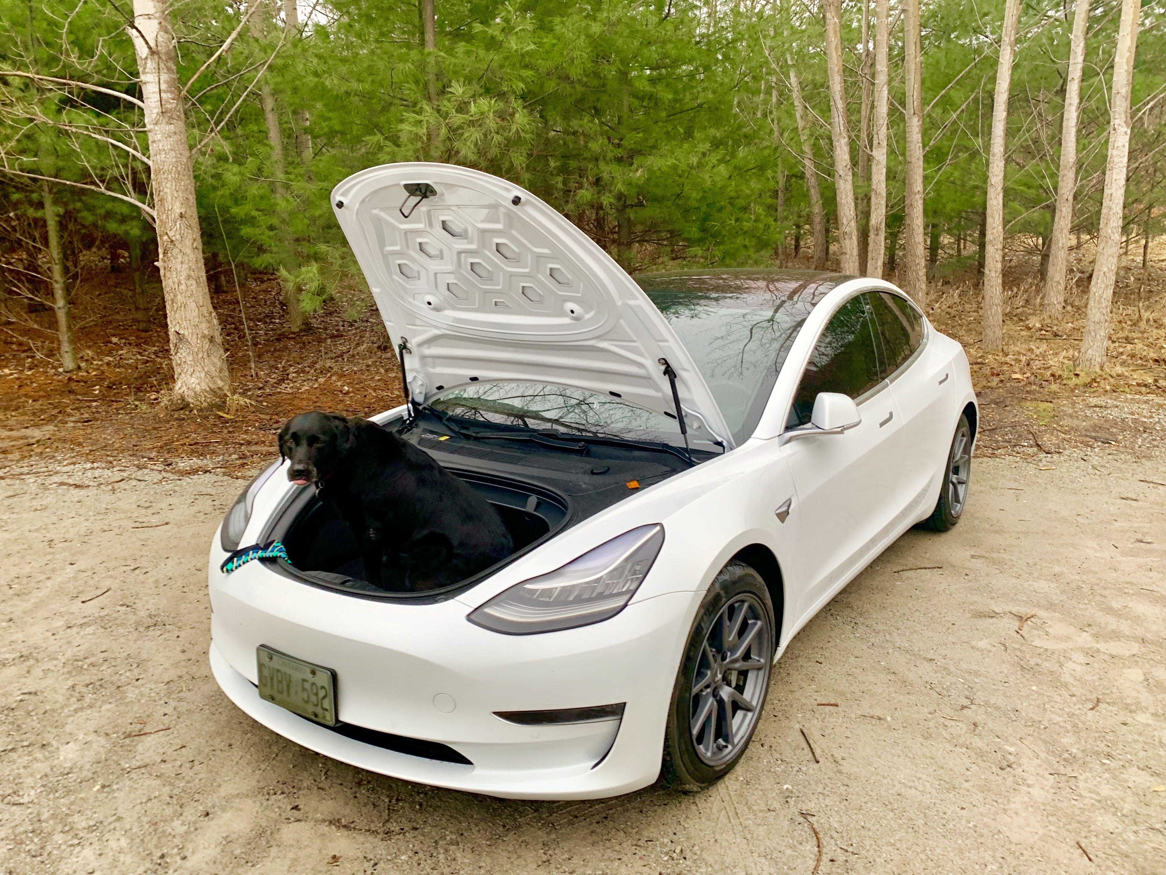 Tesla Model 3 frunk puppy 🐶 | My Tesla Model 3 AWD white Pearl