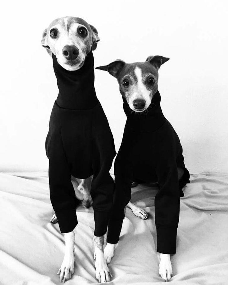 Greyhounds In Black Turtlenecks Dogsofpinterest Dogstreetstyle Stylishdogs Dogfashion Doglovers Dog Lovers Cute Animals Dog Love
