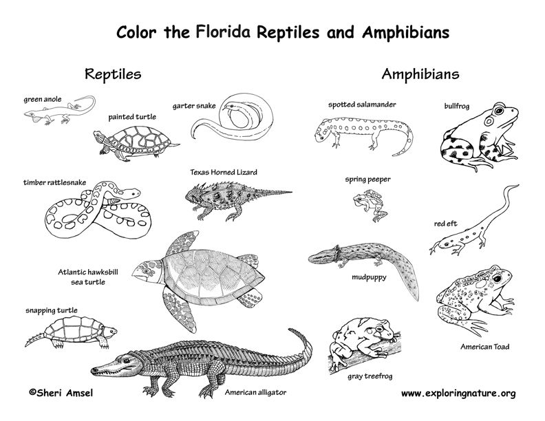 Florida  Florida  Pinterest  Animal habitats Apraxia and Unit