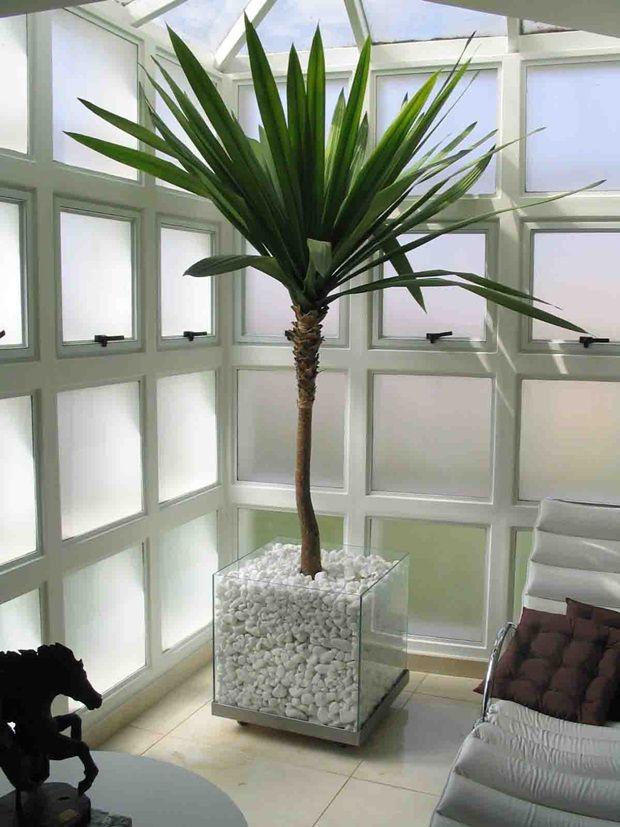 plantas ornamentais para interiores id ias nossa sala