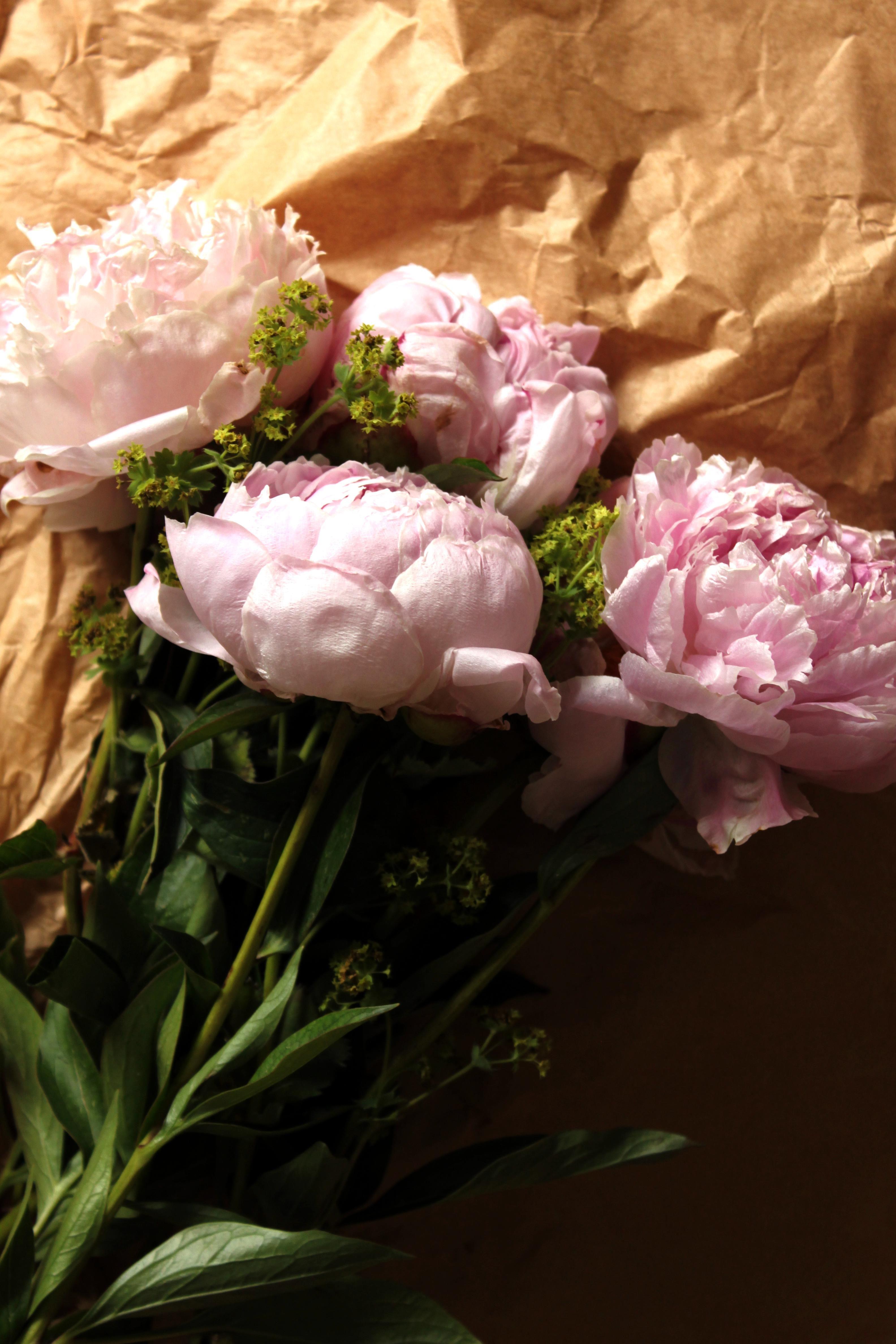 Rosa Pfingstrosen Der Sorte Sarah Bernhardt Als Schnittblume