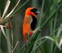 Afbeeldingsresultaat voor diverse vogels