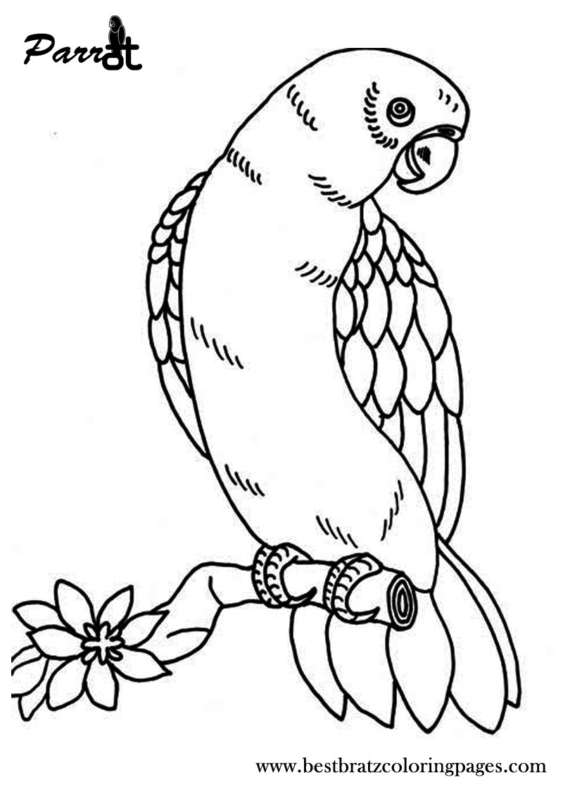 Free printable parrot coloring pages for kids coloring for Coloring pages parrot