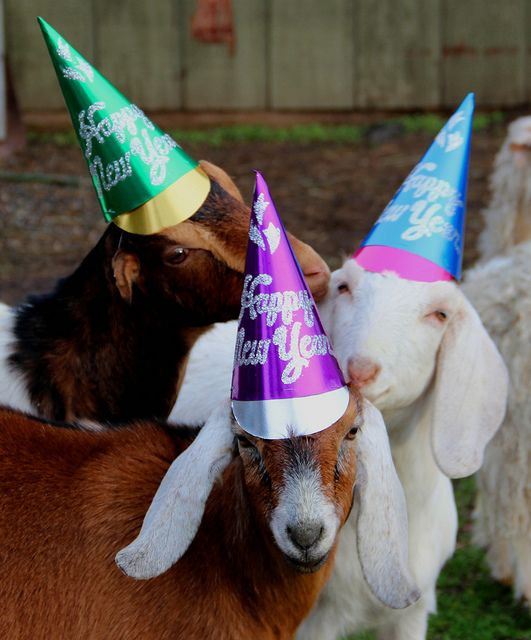 goats in hats happy new year