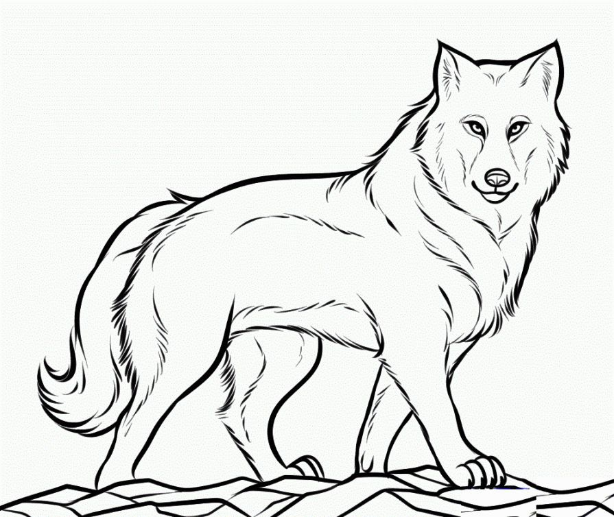 Coloring Pictures Of Wolves | Wolf colors, Animal coloring ...