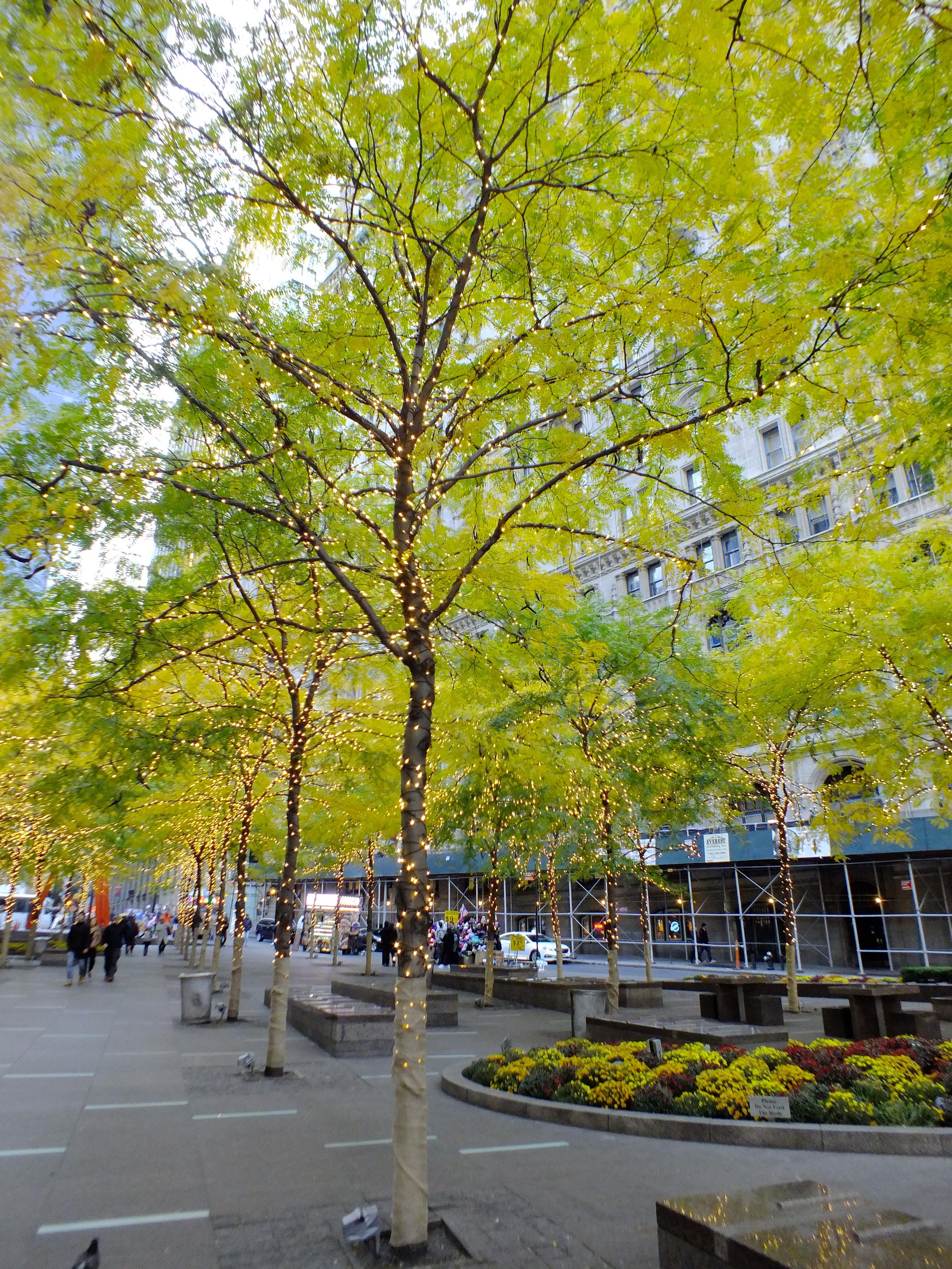 Zuccotti Park In New York City Street View I New York Park