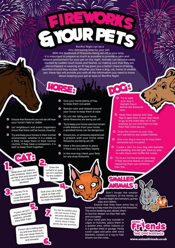 Fireworks And Pets Animal Infographic Pet Safety Dog Infographic