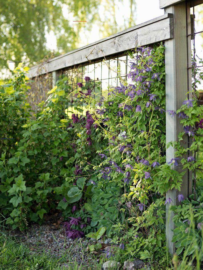 Sichtschutz mit Pflanzen » Balkon, Terrasse, Garten   OTTO ...