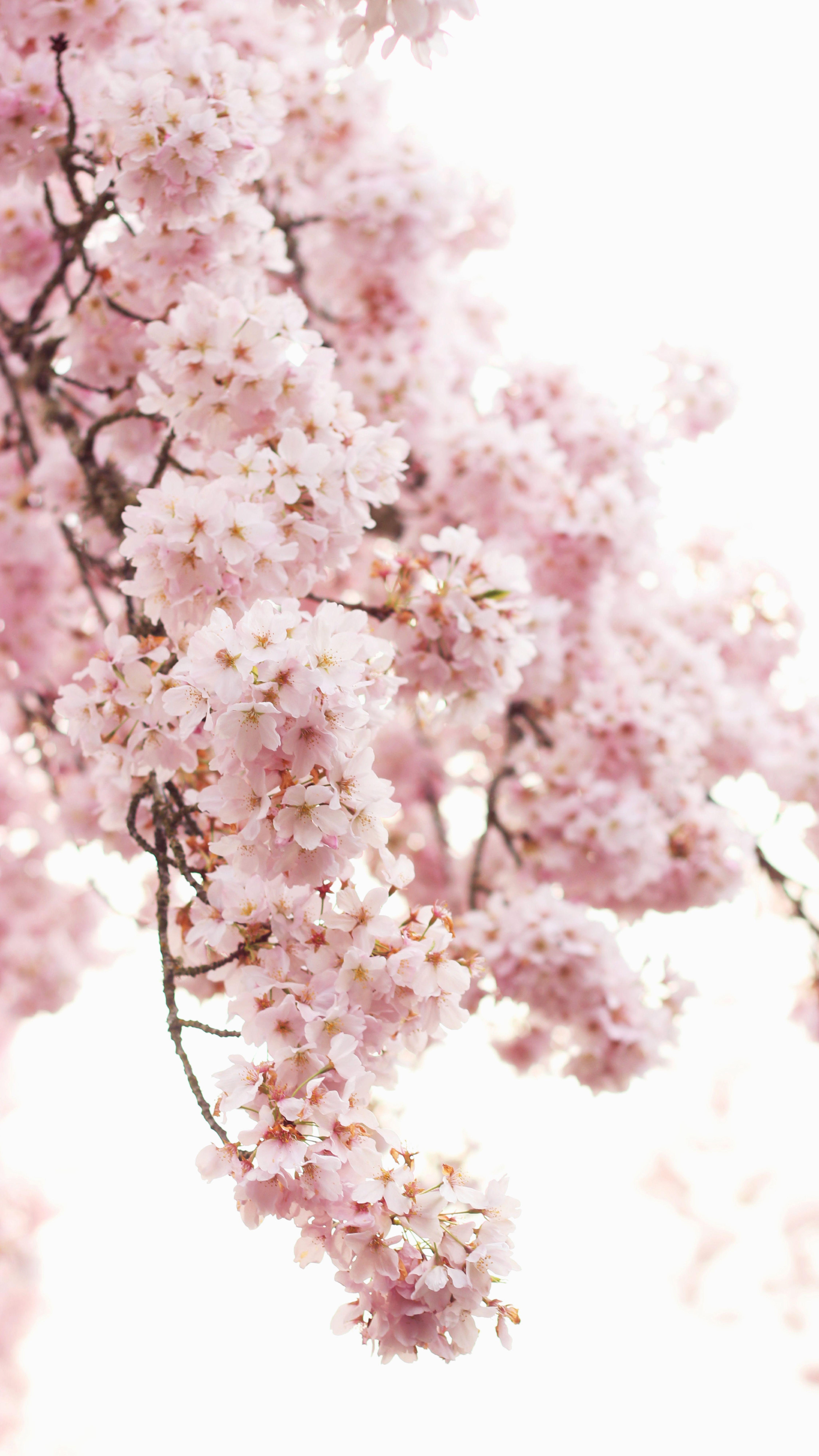 Hanami Flower Viewing Vintage Asian Art Nature Pictures Blossom