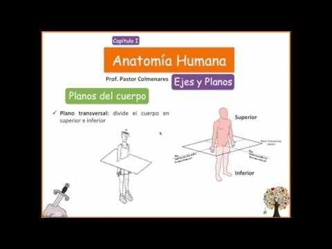 Ejes y Planos - Anatomía Humana - Capítulo I - YouTube | Vida ...