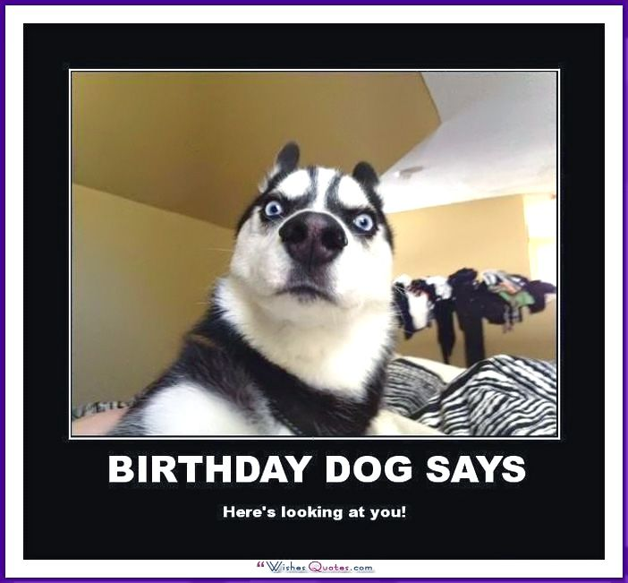 Happy Birthday Memes With Funny Cats Dogs And Animals Funny Dog Pictures Funny Animal Pictures Funny Animals