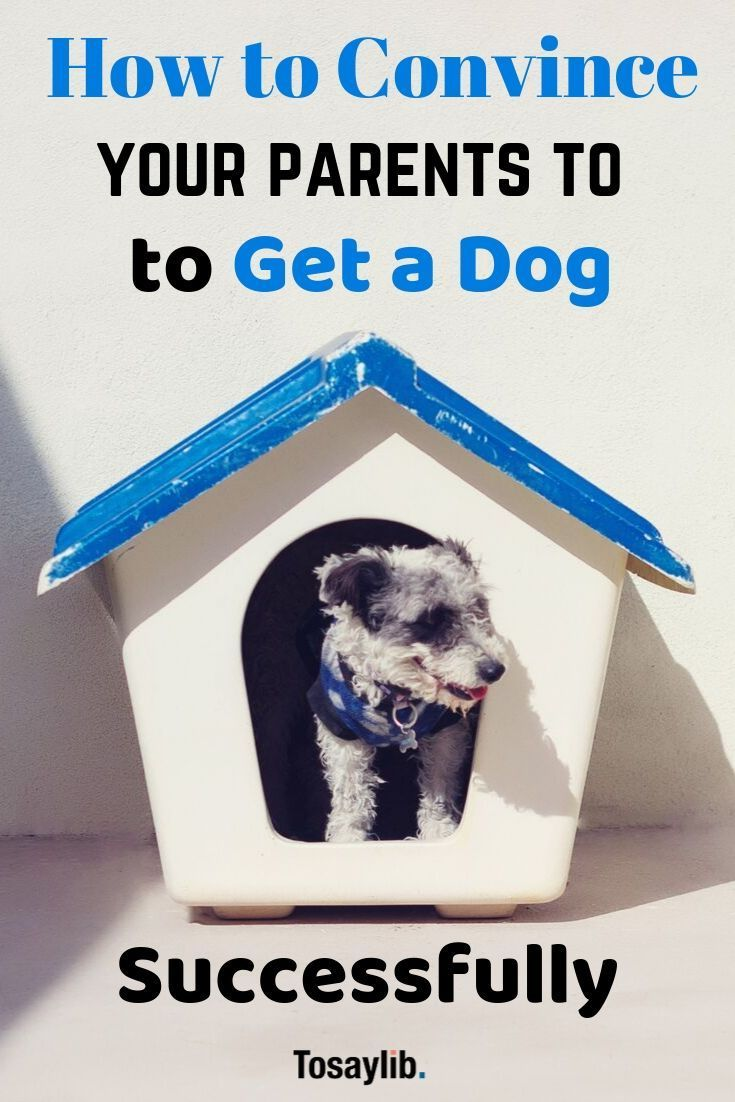How to convince your parents to get a dog successfully