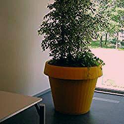 Photo of Gartenartikel