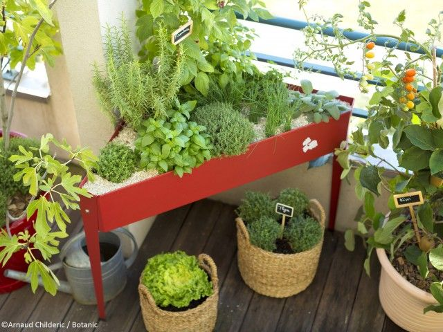 Giardino Sul Balcone Di Casa : Realizzare un orto sul terrazzo il verde