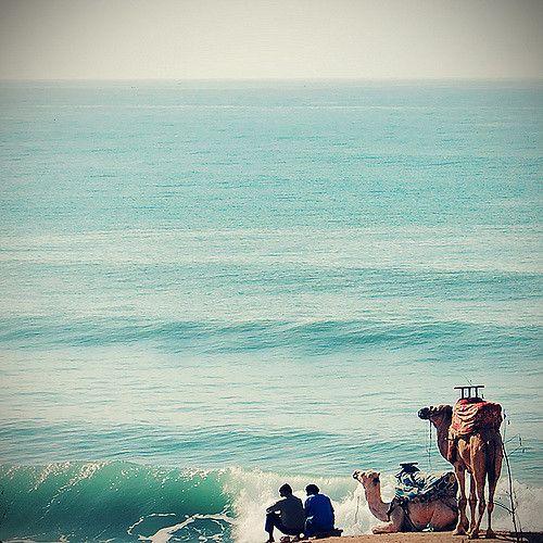 https://flic.kr/p/7GZfbu | Morocco | two camels two Men one beach
