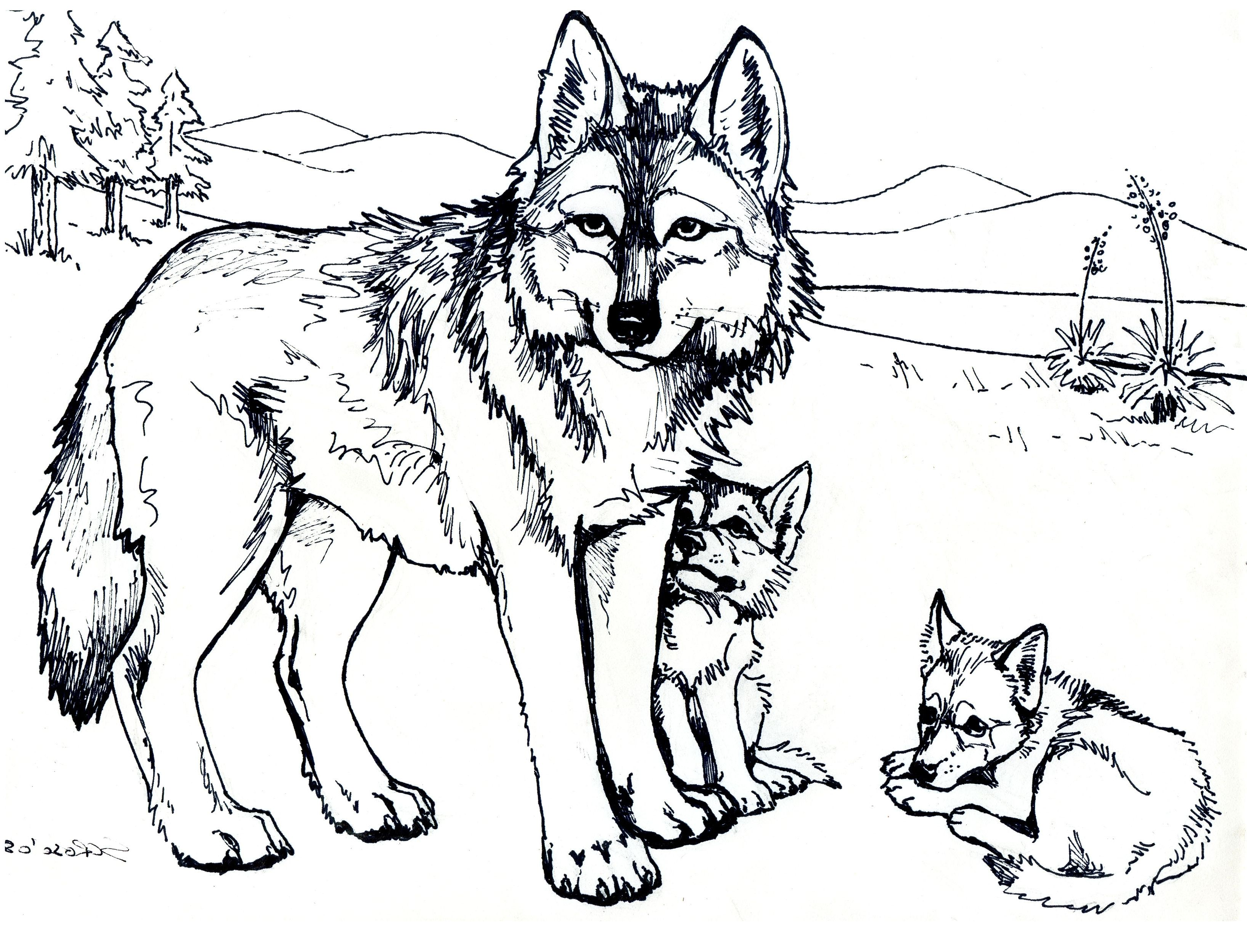 Wolf Coloring Pages For Adults Free Printable Wolf Coloring Pages ...