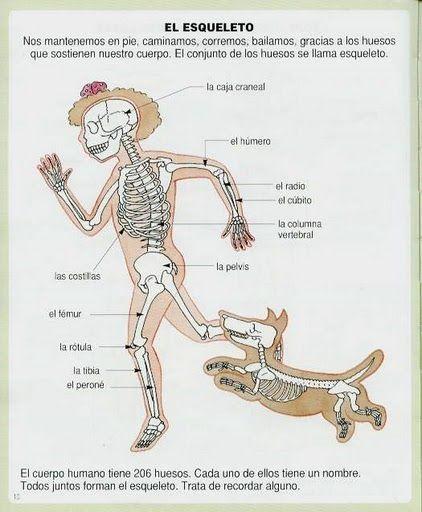 Esqueleto Humano Y Sus Partes Dibujo Healthy Hesongbai