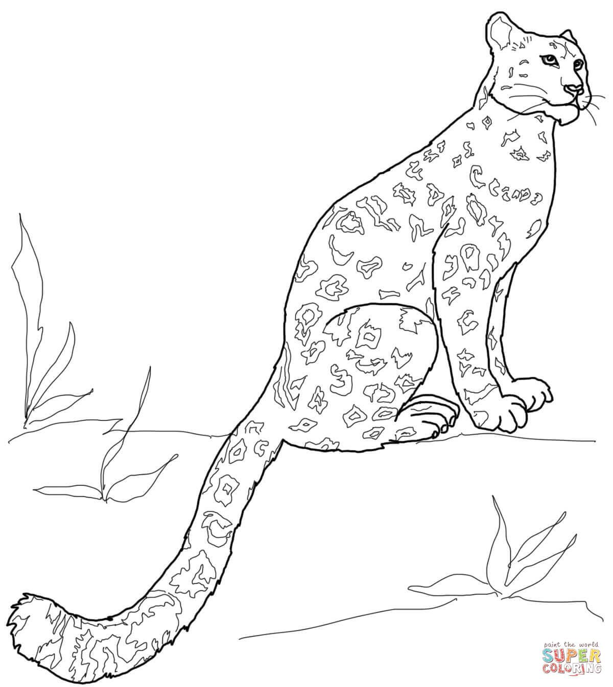 Drawn Snow Leopard Tree Drawing Pencil And In Color Drawn Snow