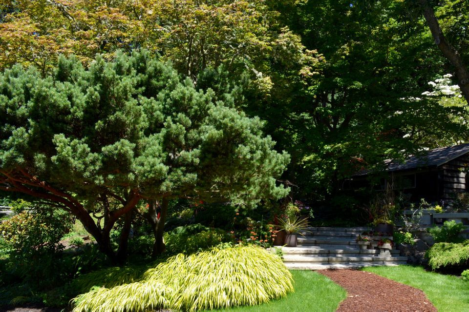 10 Favorites From Great Plant Picks For Northwest Gardens The