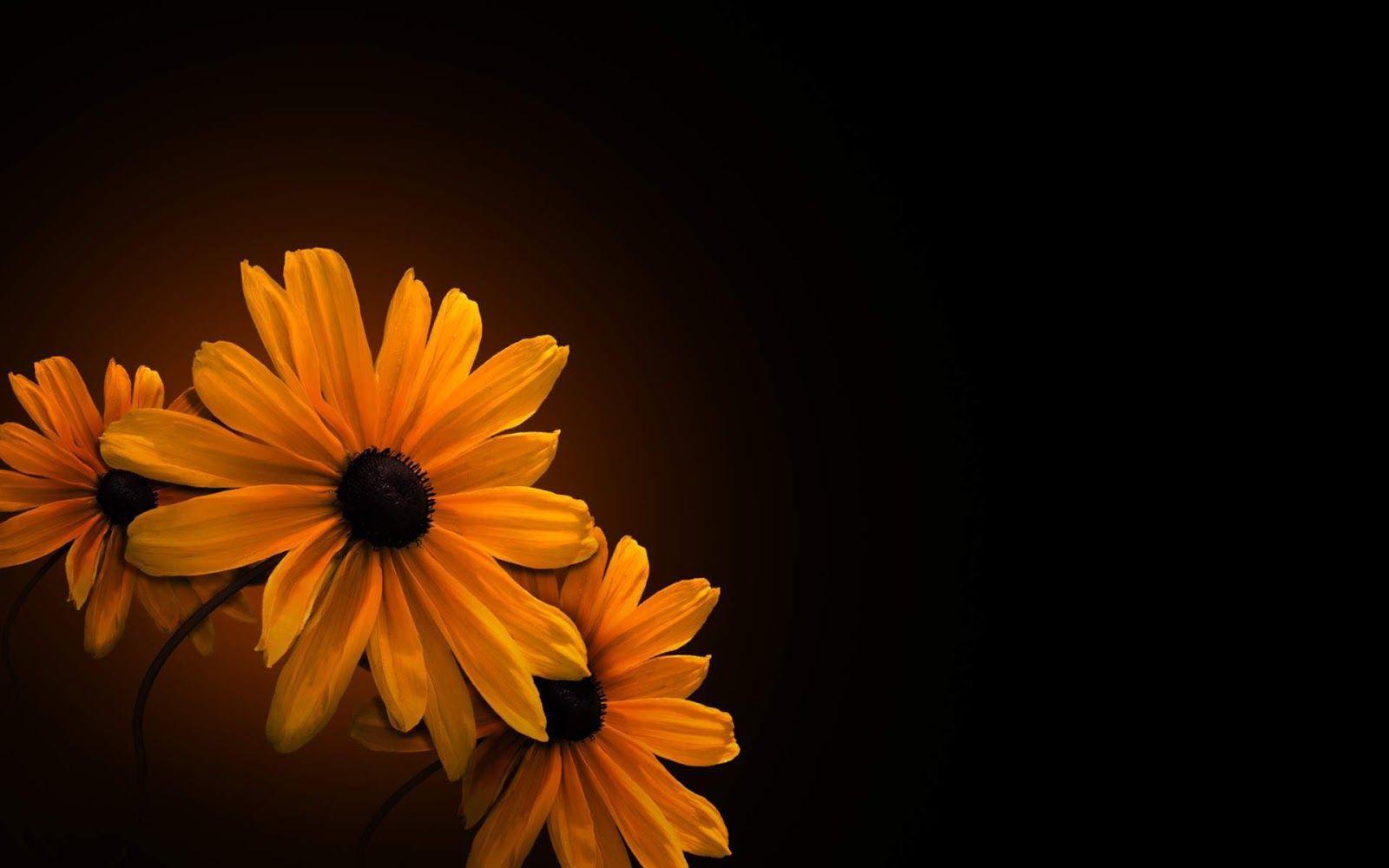 Orange And Brown Backgrounds Orange Flower On Black Background