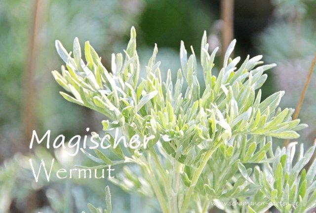 Wermut, Heilpflanze, Heilkraft Wermut, magisch