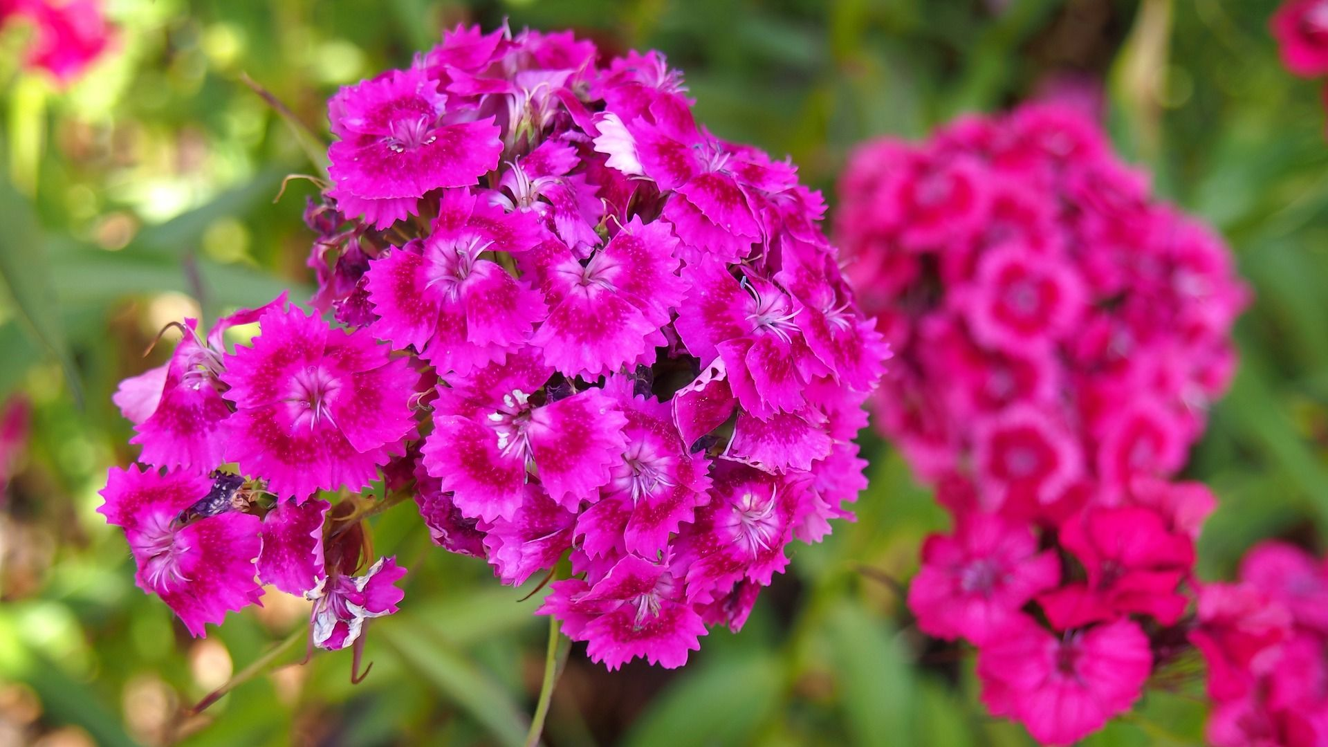 Najpiekniejsze Kwiaty Gozdziki Gozdzik Jesien Kwiaty Ogrod Pomysly Inspiracje Jesienne Kwiat Flower Bouquet Drawing Carnation Flower Garden Ornaments