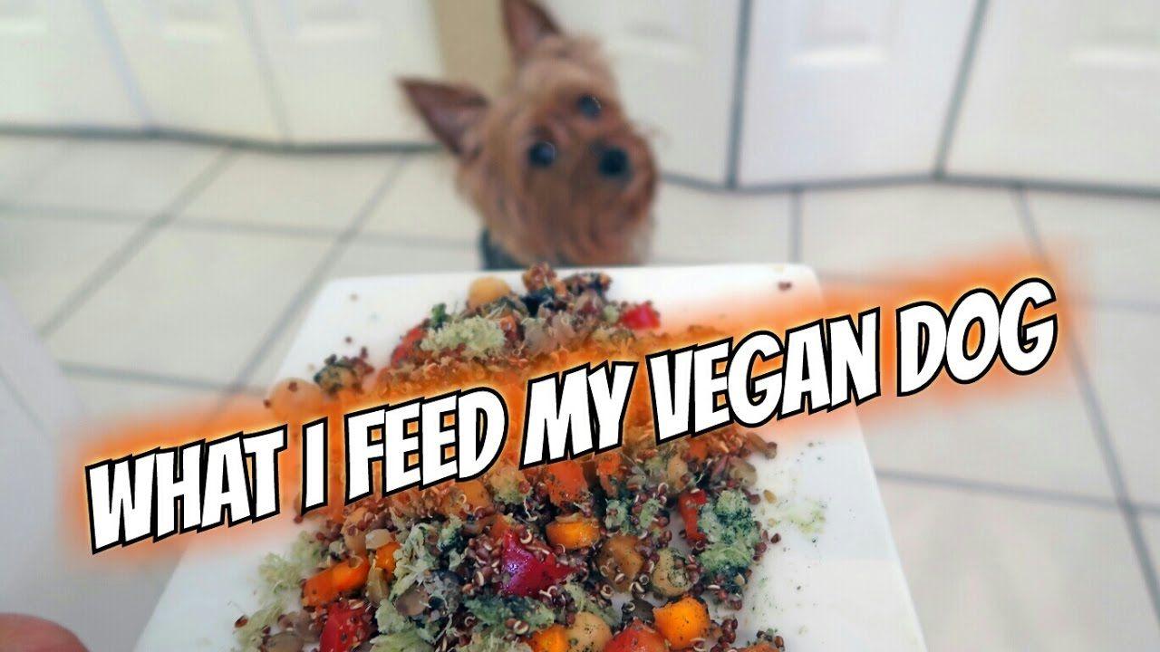 What I Feed My Vegan Dog Youtube Vegan Dog Food Vegan Dog