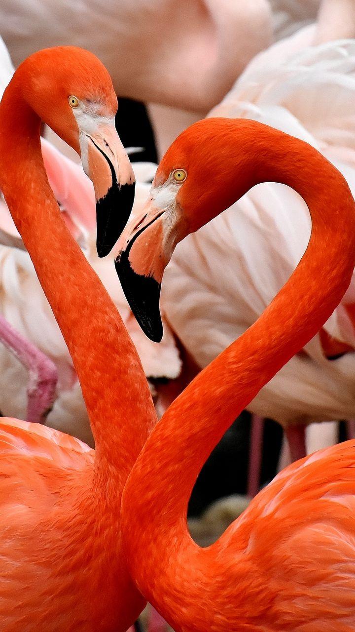 151 High Quality Iphone Wallpapers Розовые фламинго