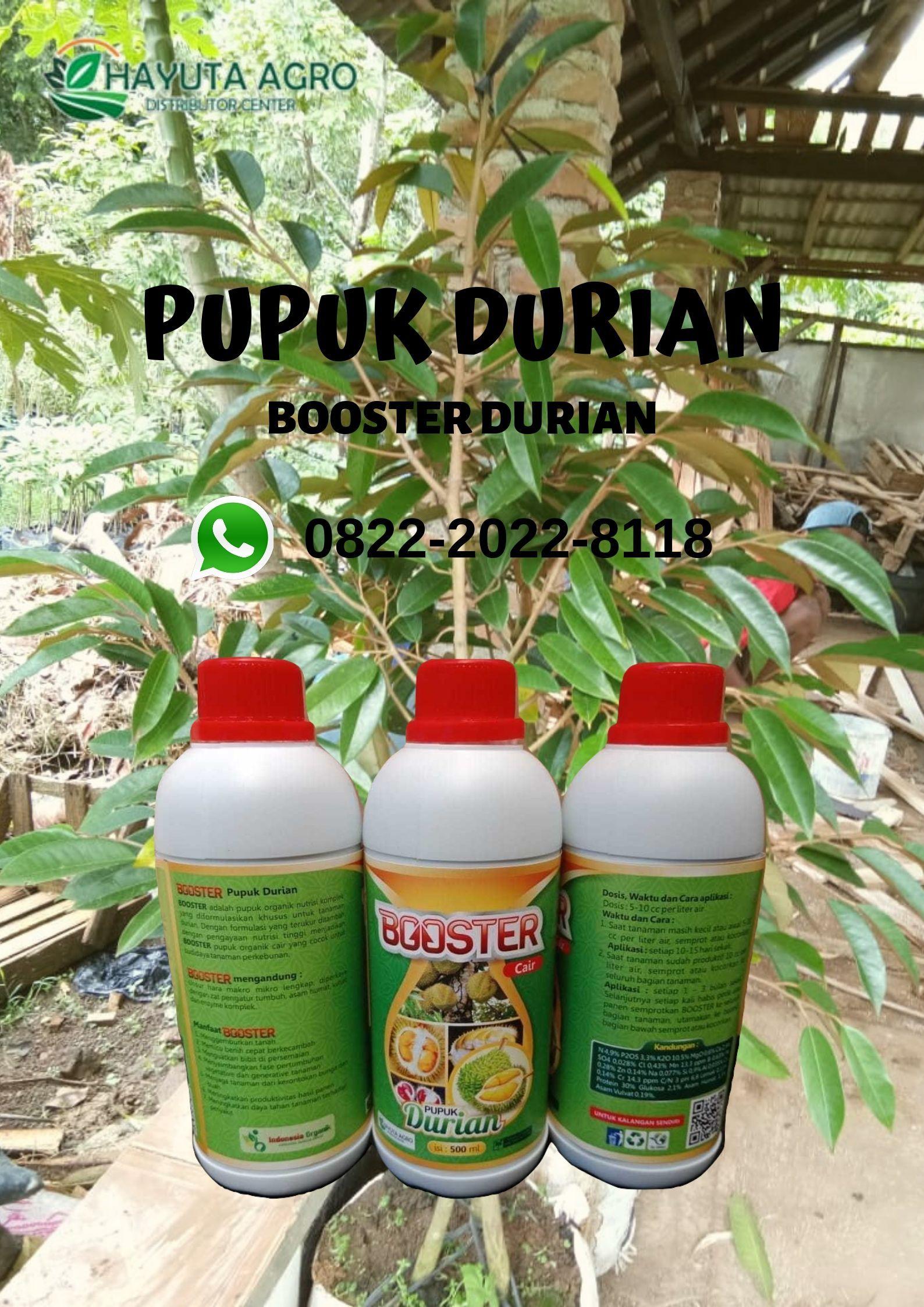 Wa O822 2o22 8ii8 Jual Pupuk Durian Berbuah Lebat Di Toraja Utara Harga Pupuk Durian Di Wajo Buah Tanaman Kepulauan