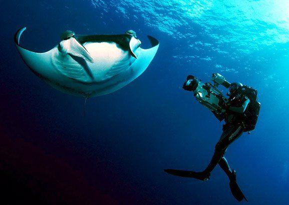 Manta Ray Night Dive Kona Hawaii Diving Under The Sea Manta Ray