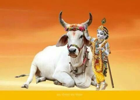 The Power of Gomata - The Blessings Of The Holy Divine Cow