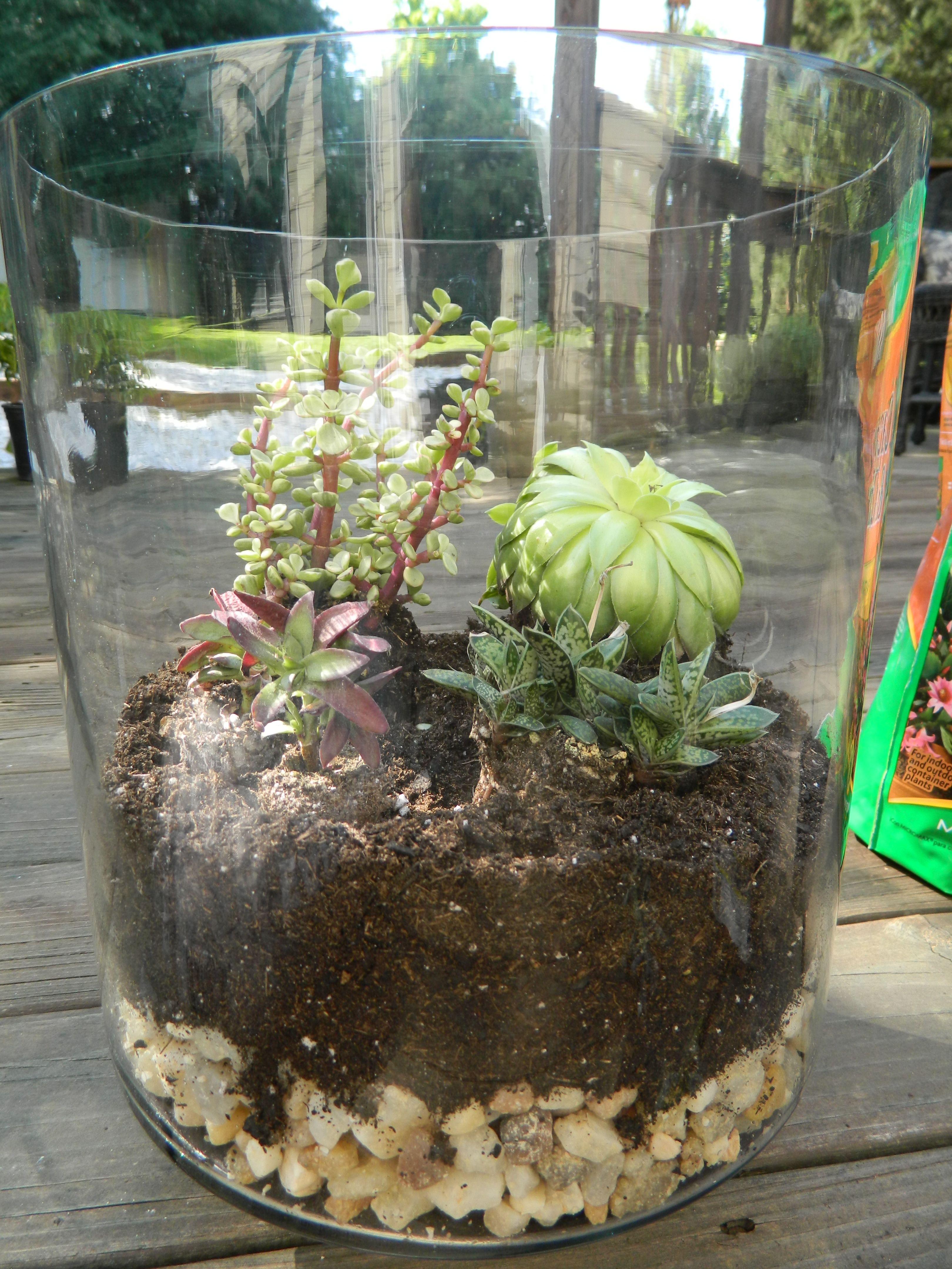 Succulent terrariums turn average glass jars - Como decorar mi jardin ...