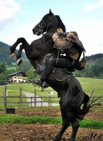 Horse rearing up with rider and falcon. | Beautiful horses ...