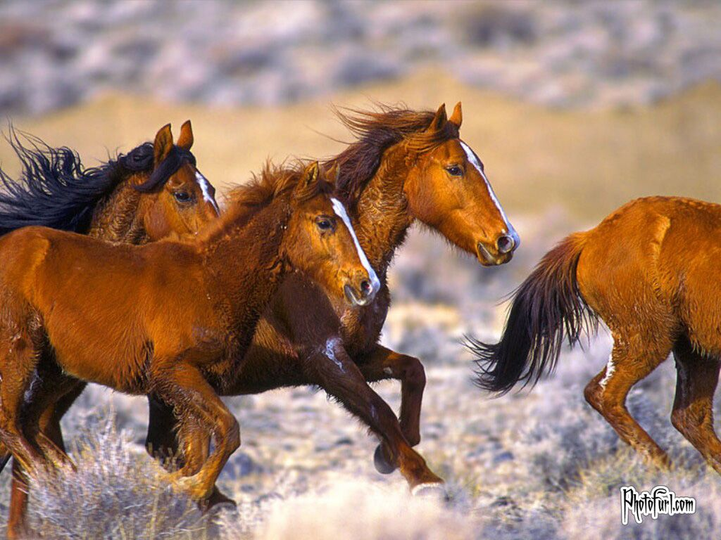Download Wallpaper Horse Desert - 52234eb14f3aea69a13996c58c6e1896  Graphic_494645.jpg