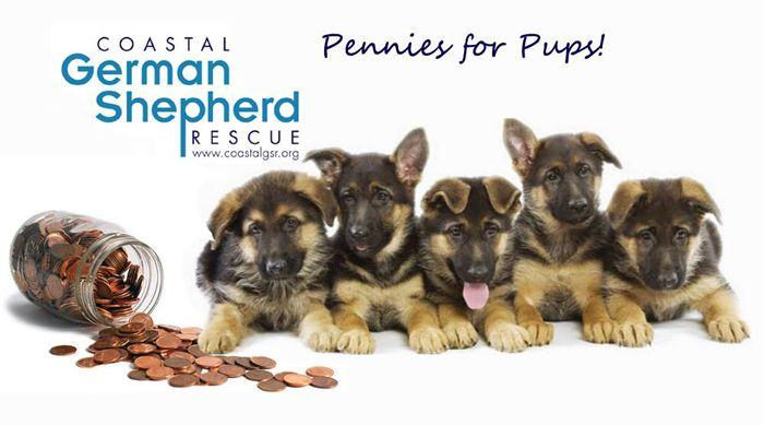 Coastal German Shepherd Rescue Adopt Puppies In Orange County And
