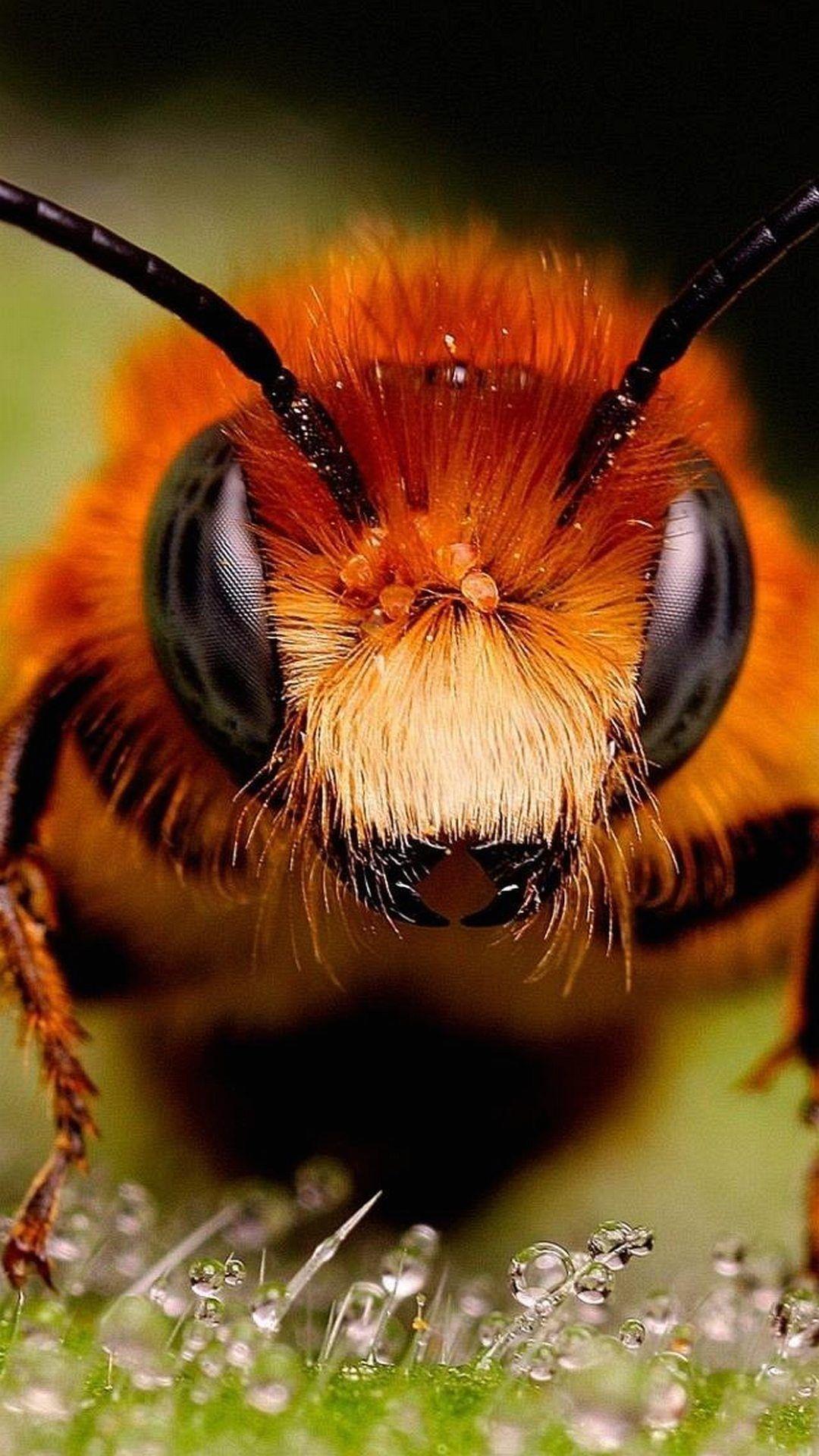 Bee Macro 12 Amazing Macro Photography Of Insects Macro Style Hd