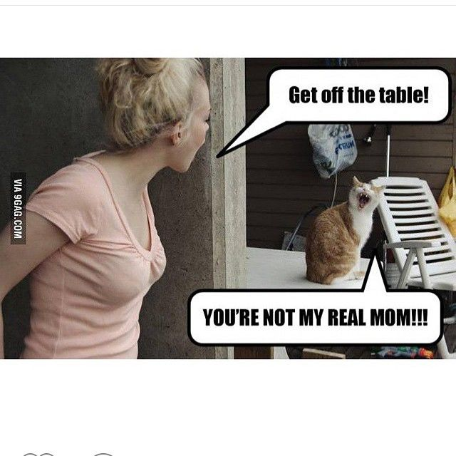 Get off the table cat You're not my real mom, human  Cut animals pets meme