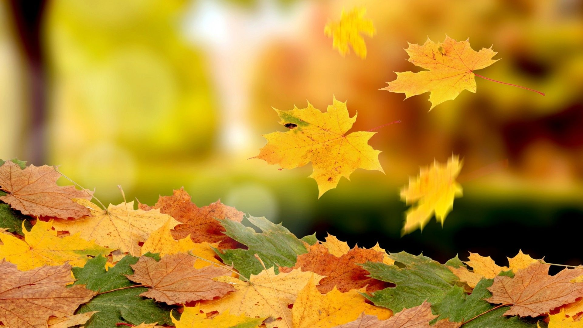 Flying Leaves Autumn Carpet Beautiful Flowers And Plants Wallpapers Hd Wallpaper Download For Ip Autumn Wallpaper Hd Fall Wallpaper Autumn Leaves Wallpaper