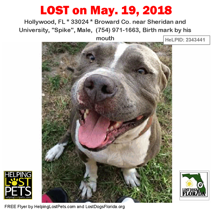 Have You Seen This Lost Dog Lostdog Spike Hollywood Sheridan