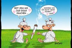Vs gras rauchen schafe pinterest lustig witzig und - Morgenlatte lustig ...