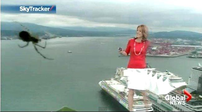 KOFEE NEWS IN TOMORROW LANDS:: Presentadora del clima se llevó tremendo susto en ...