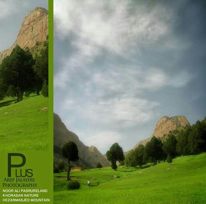 Golf Courses, Iran, Field