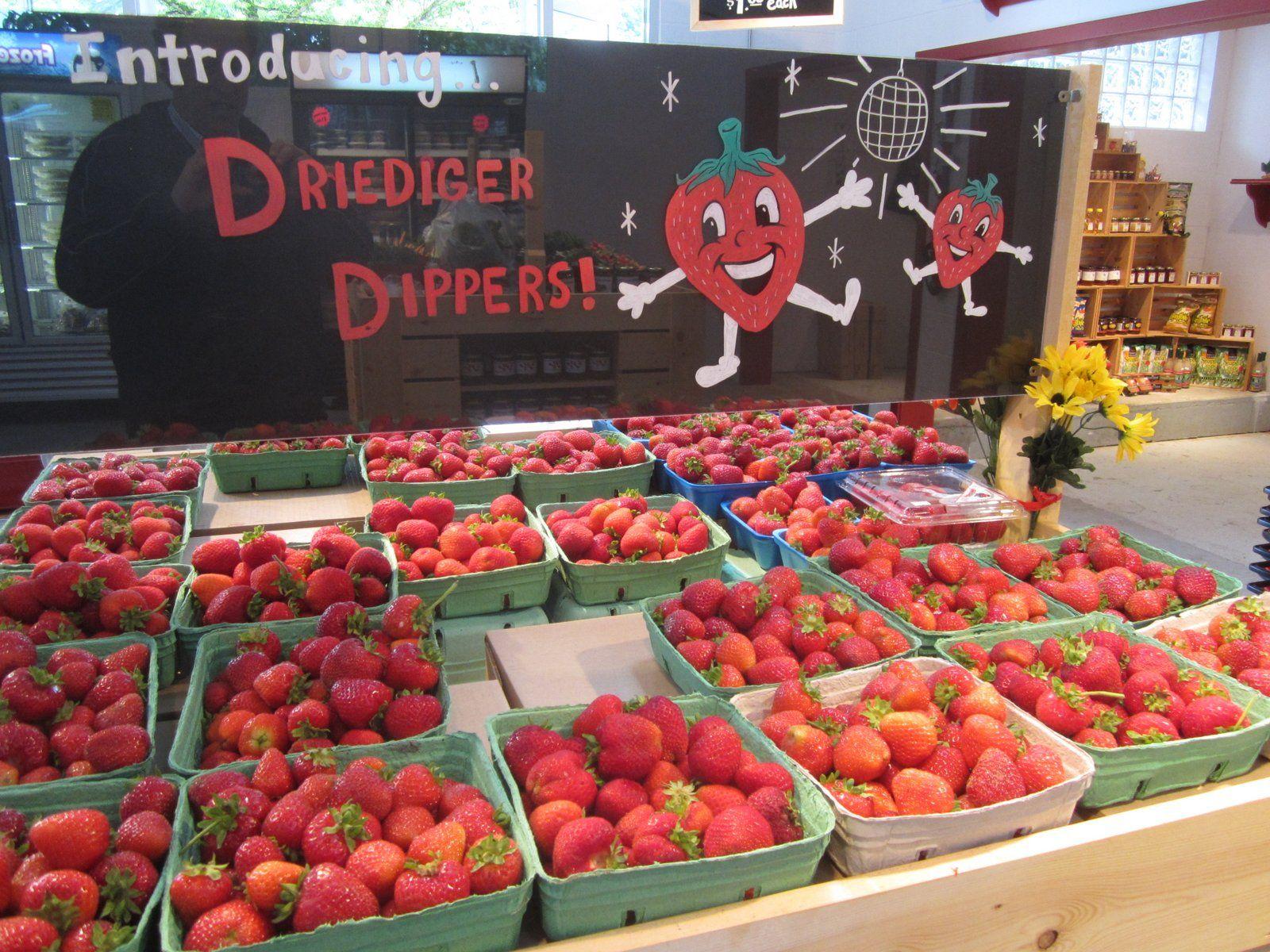 Driediger Farms Vancouver Foodster Farm Tour Farm Tours
