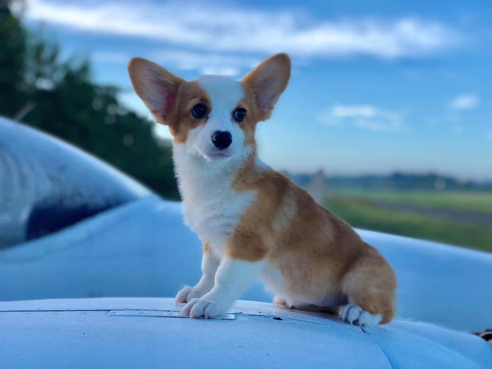22++ Cute dog names philippines ideas in 2021