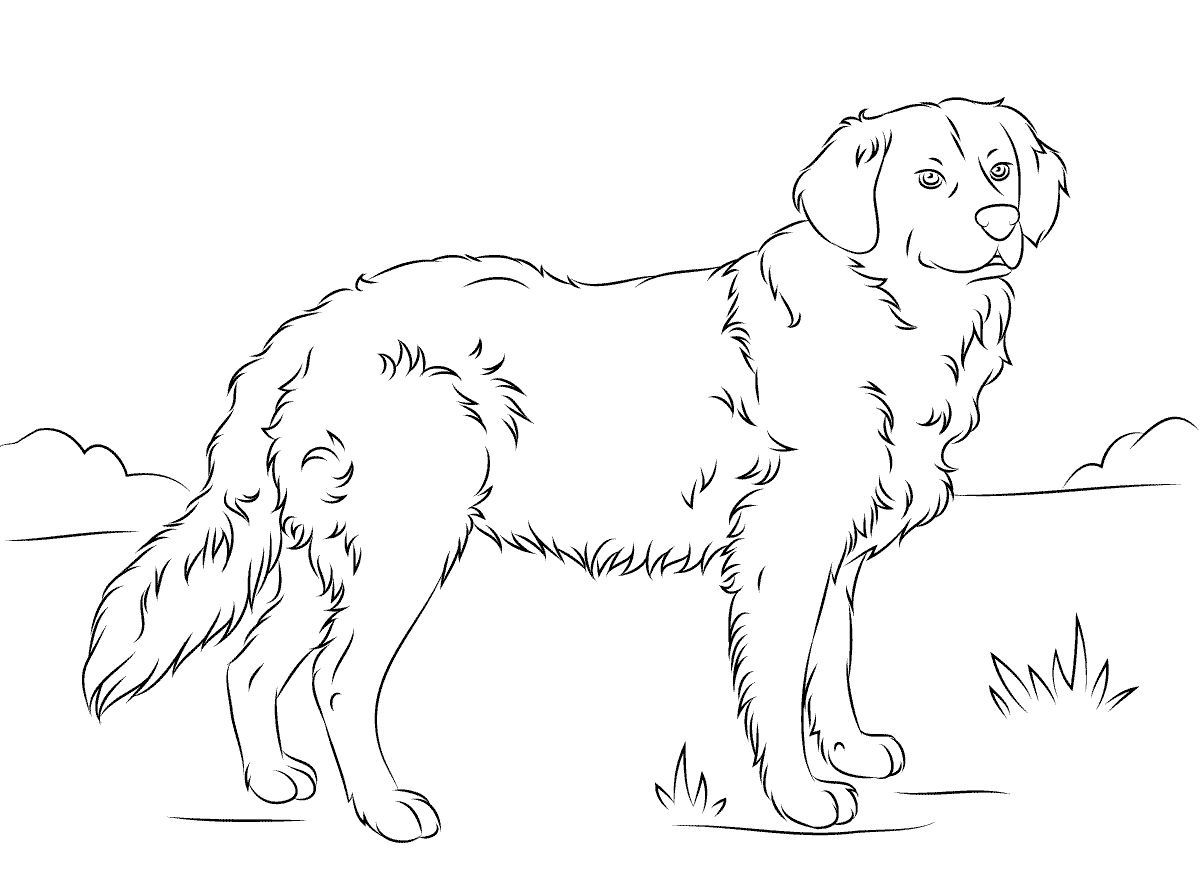 Golden Retriever Coloring Page For Animal Lovers ...